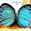 SOLD 'Blue Butterfly' Home Decor Bowl TB1708